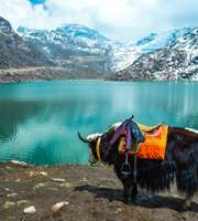 Sizzling Sikkim Honeymoon Package From Kolkata