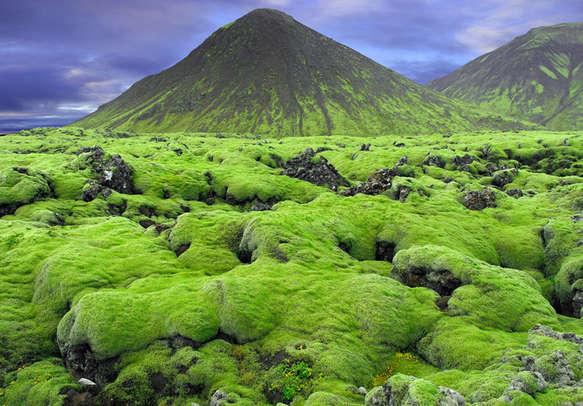 Moss in an Icelandic Landscape