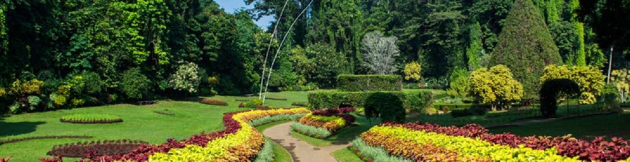 Visit the lovely Botanical Garden in Sri Lanka