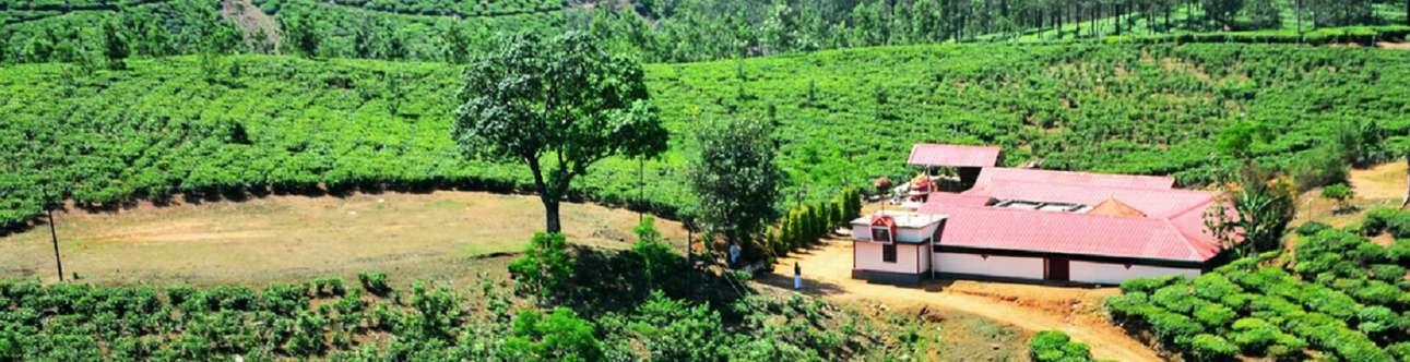 Visit the Vagamon City in Kerala