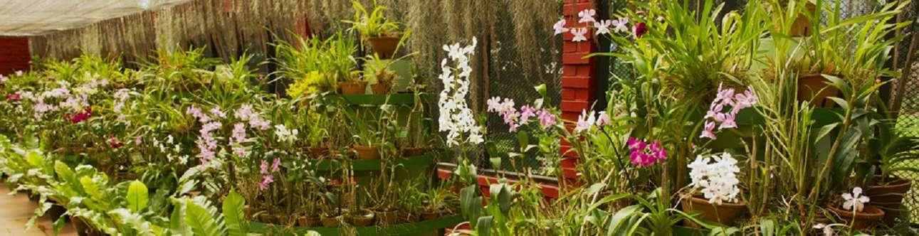 Visit the Spice Garden in Kandy, Sri Lanka