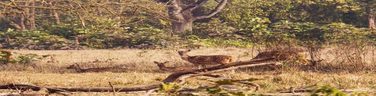 Visit the Rajaji National Park in Dehradun