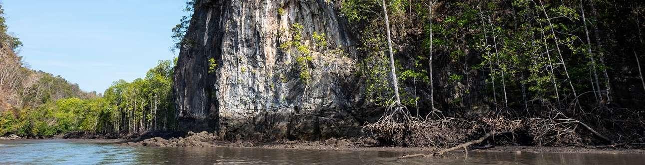 Mangrove tour in Langkawi