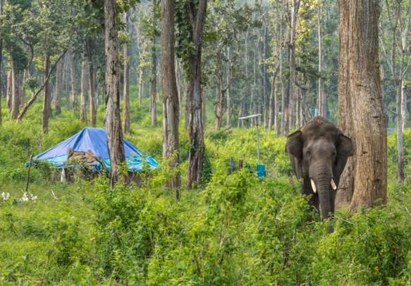 Indulge in safari at Dubare Reserve Forest in Coorg