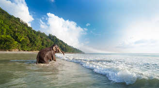 Elephant walking at Elephant Beach in Andaman