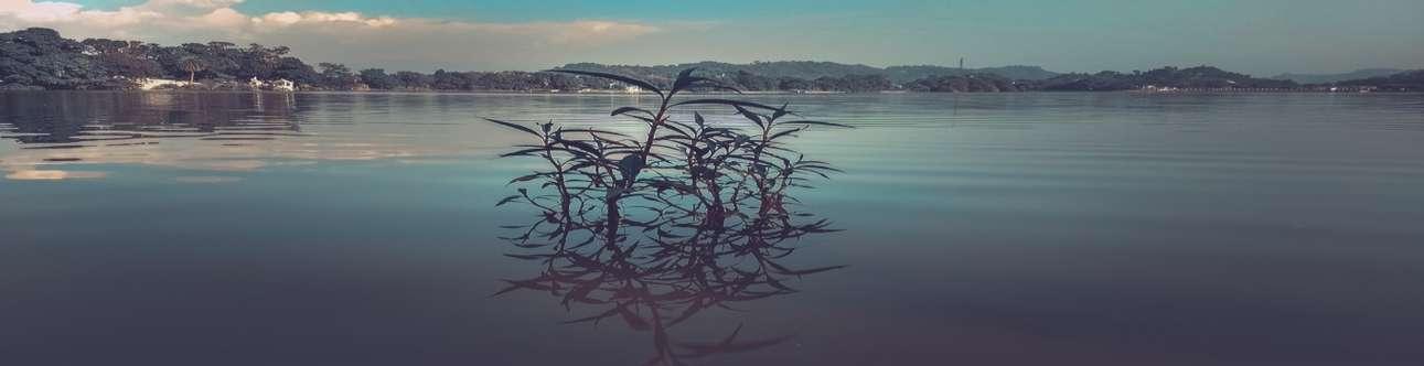 Visit the beautiful Surinsar Lake in Jammu