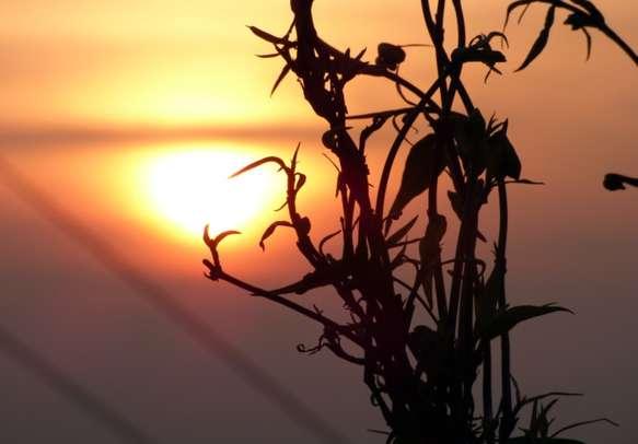Beautiful Sunrise at Lolegaon Dargeeling district India