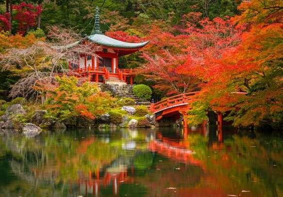 Daigo Temple With Colourful Mapple Trees