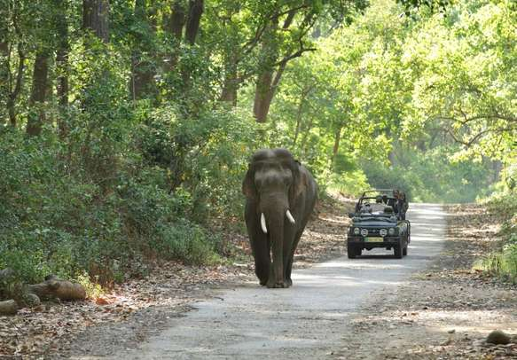 Partake in jungle safari in the oldest national park of India