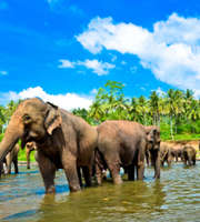 Lovely Sri Lanka Honeymoon Package