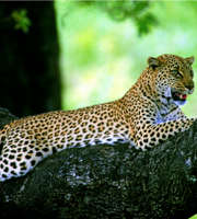 Best Selling Adventurous Sri Lanka Tour Package