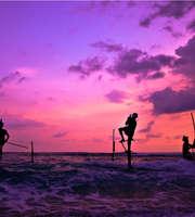 Amazing Sri Lanka Holiday: Whale Watching & Turtle Hatchery