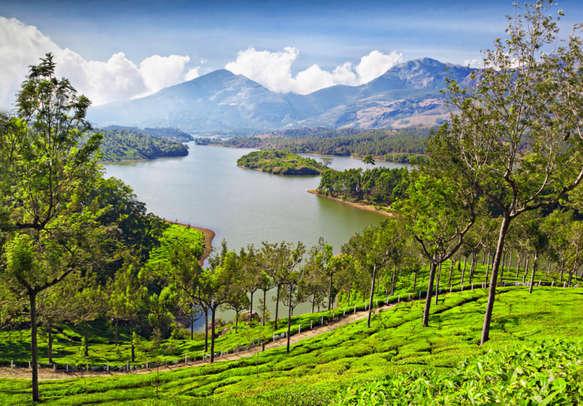 While on your family trip to Sri Lanka, visit the sprawling  tea gardens in Sri Lanka