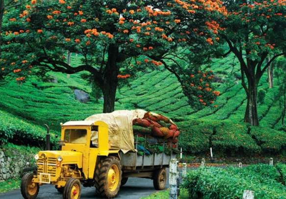 The colorful streets of Munnar will leave you mesmerized
