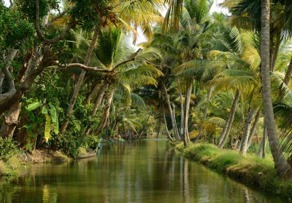 Sail on the picturesque backwaters of Alleppey in Kerala