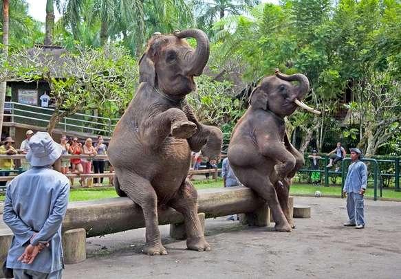 Bali Elephant Circus