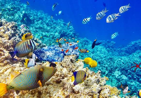 Take a peep into the underwater marine life of Mauritius