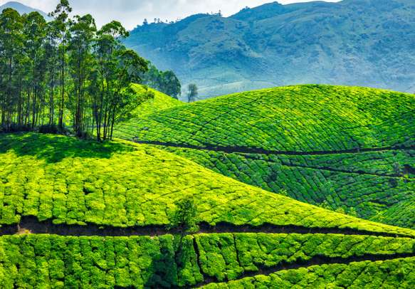 Glance at the marvels of nature in Munnar and feel grateful