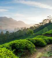 Best Selling Kerala Honeymoon Tour Package