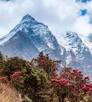 Adventurous Sikkim, Kalimpong & Darjeeling Tour Package