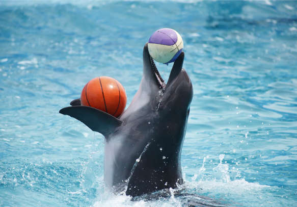 Visit the Dubai Dolphinarium and interact with the most lovable creatures of the sea