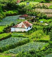 Wayanad Tour Package For 3 Days and 2 Nights