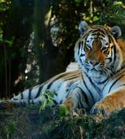 Jim Corbett Wilderness Tour Package