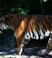 Thrilling Jim Corbett Tour Package From Ramnagar