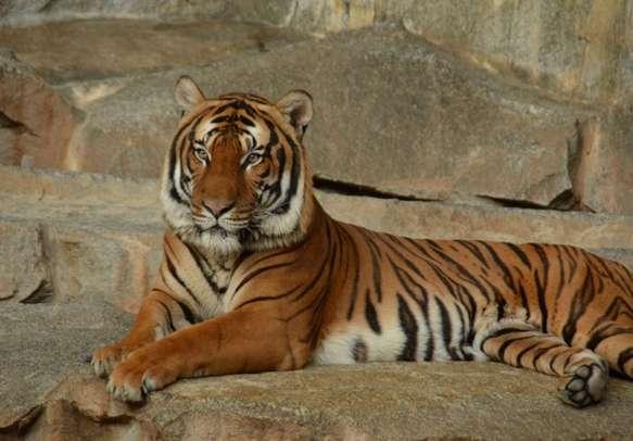 Go tiger spotting in Jim Corbett