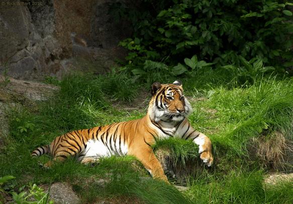 Take the last bout of animal safari and enjoy!