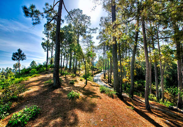 Let the beauty of nature captivate you on this Uttarakhand tour package