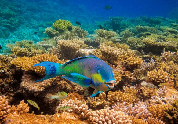 Newlyweds can witness amazing marine life on their honeymoon in Maldives