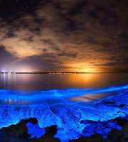 Special Bioluminescent Beach Maldives Honeymoon Package