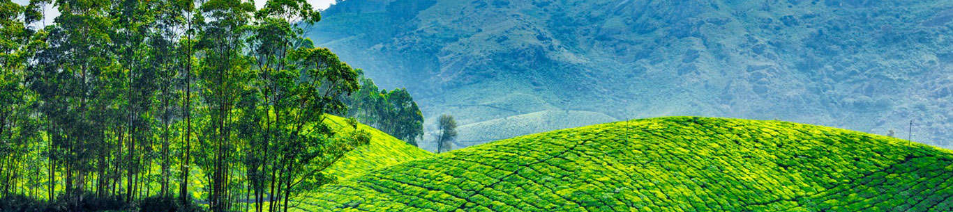 Get set for amazing moments on your trip to Kerala