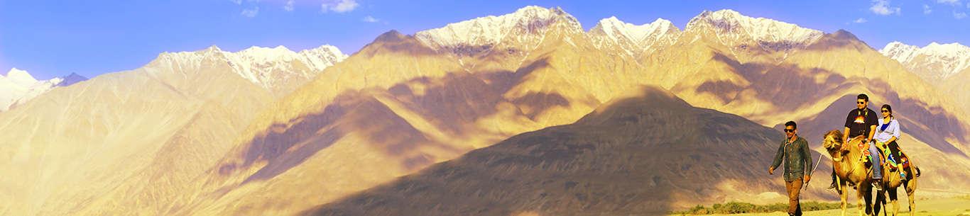 Go on a romantic camel ride on your honeymoon in Ladakh