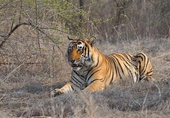 Explore the wilderness of Ranthambore National Park for its fascinating fauna