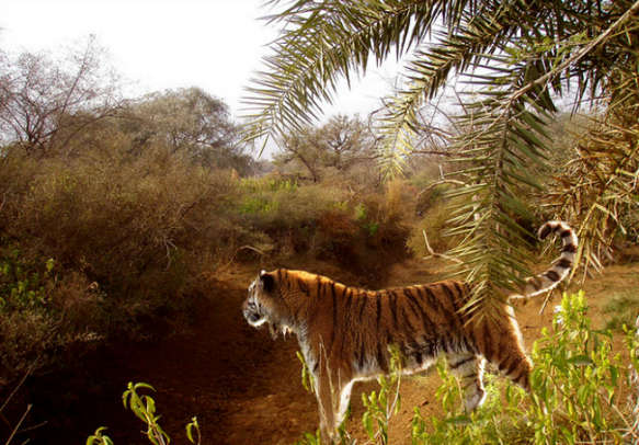 Enjoy your trip to the wild by availing Rajasthan tour packages