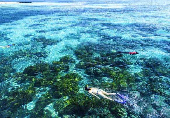 Go snorkeling and scuba diving in the Great Barrier Reef in Australia