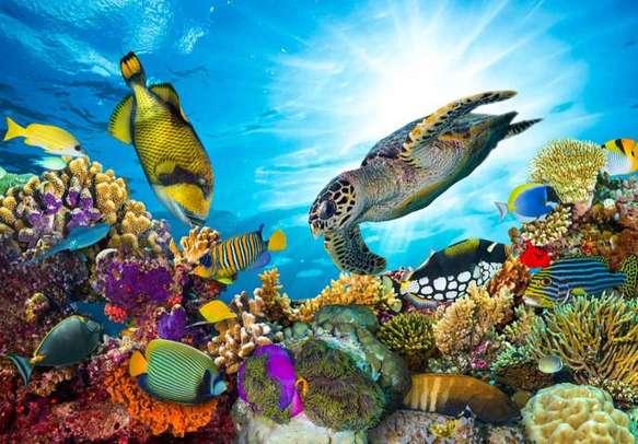 Enjoy the vibrant marine life on this holiday tour of Australia