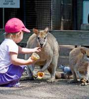 Kid-Friendly Australia Tour Package: Penguins & Koalas