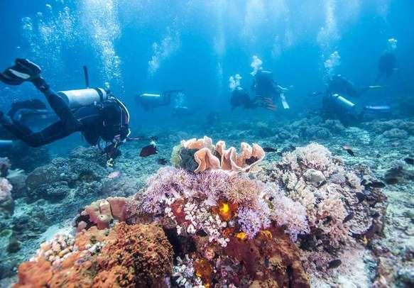 Scuba diving is a popular water sport activity in Australia.