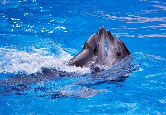 Interact with dolphins on your Australia tour itinerary