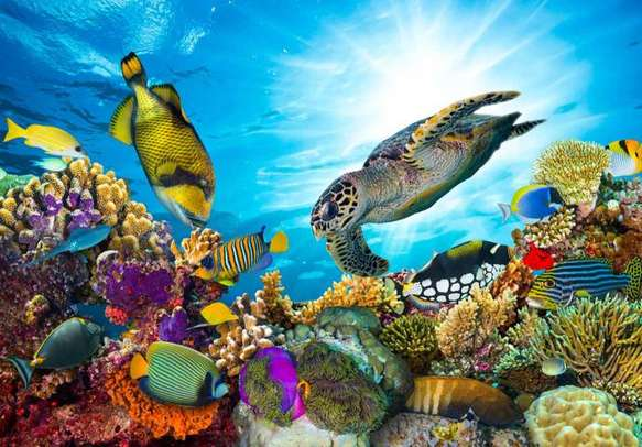 Get a dose of the colorful marine life on your Australia vacation