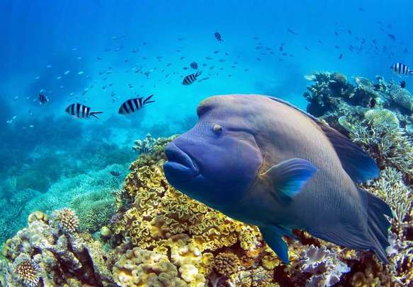 The Great Barrier reef is one of Australia's greatest tourist attractions.