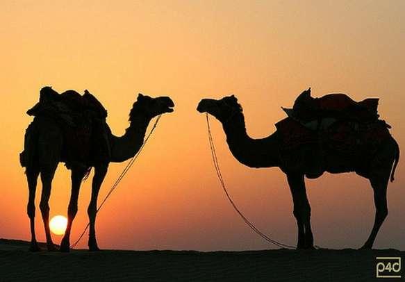 Stunning sunset in Rajasthan