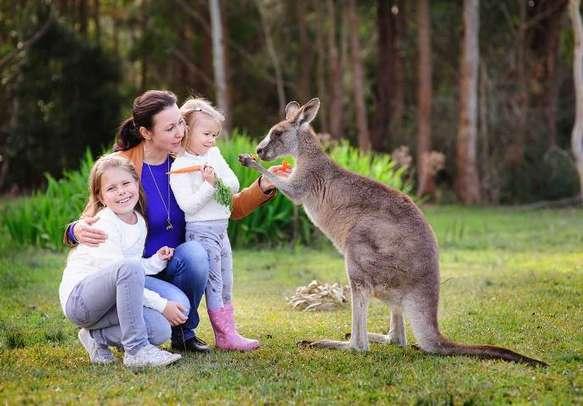 Cuddle with the furry koalas and mingle with the kangaroos in Kuranda