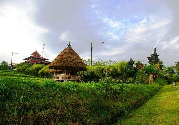 Flourishing coffee plantation in Bali.