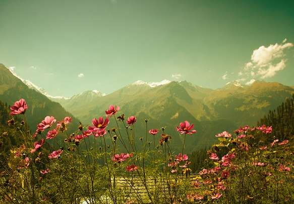 The natural beauty of Himachal will make you fall in love with this place