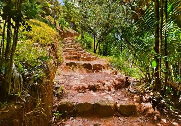 Pathway in the jungle of Valle de Mai on Praslin island.