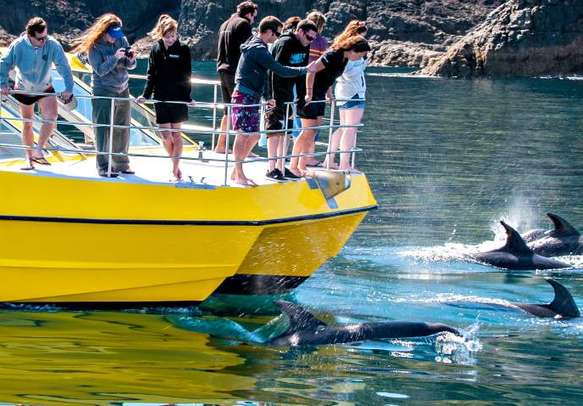 Boat cruise in Bay of Islands is another famous tourist attraction
